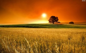 comida-biologica-natural-ecological-food